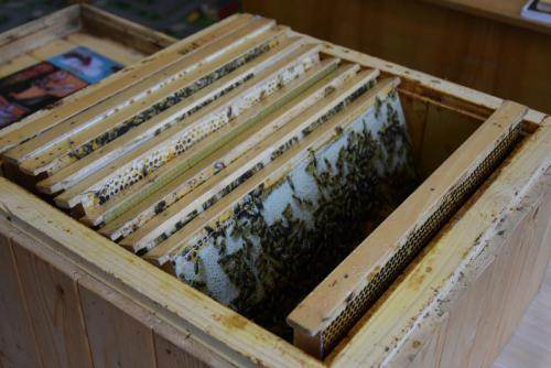 Zlatá včela 2019 Jimramov 004